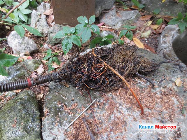 Корени в канализацията, от дърветата намиращи се наоколо
