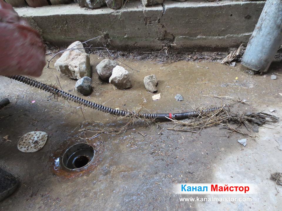 Тези корени най-вероятно са прораснали в канализацията през снадките на тръбите