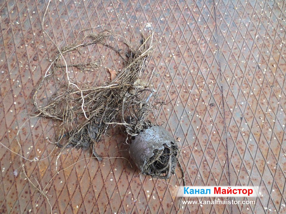 Изрязаните от канализационната тръба корени